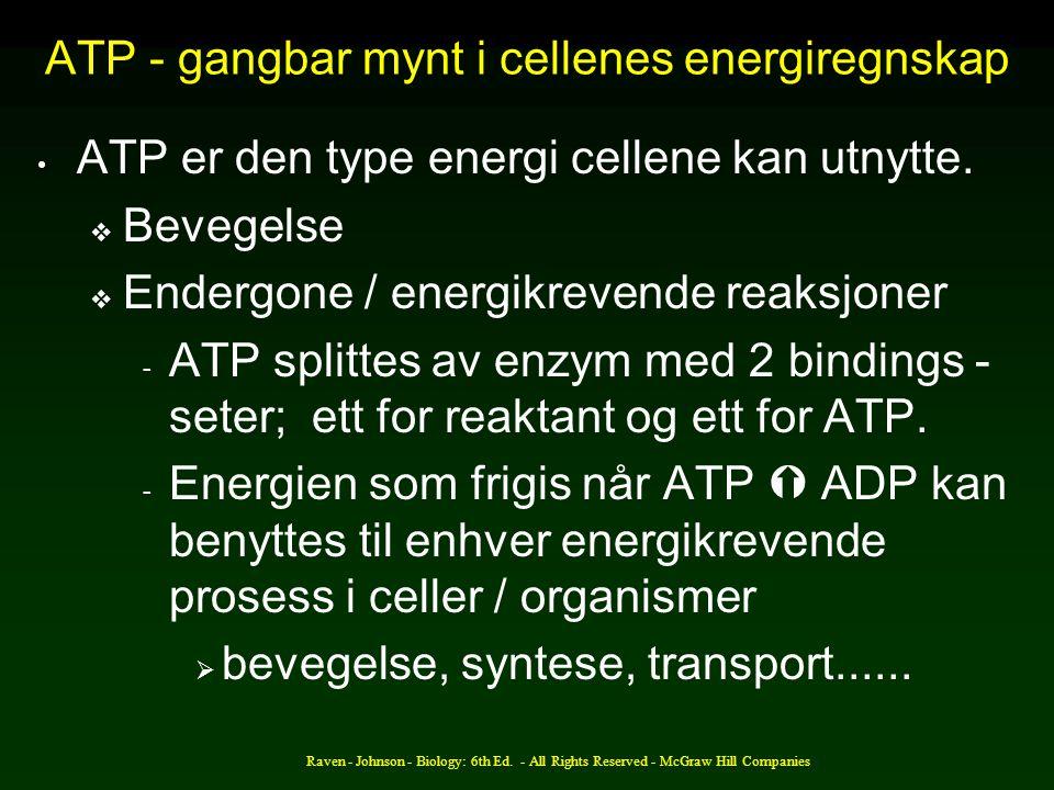 ATP - gangbar mynt i cellenes energiregnskap