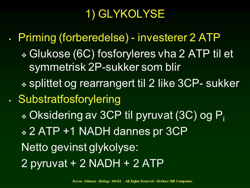 Priming (forberedelse) - investerer 2 ATP
