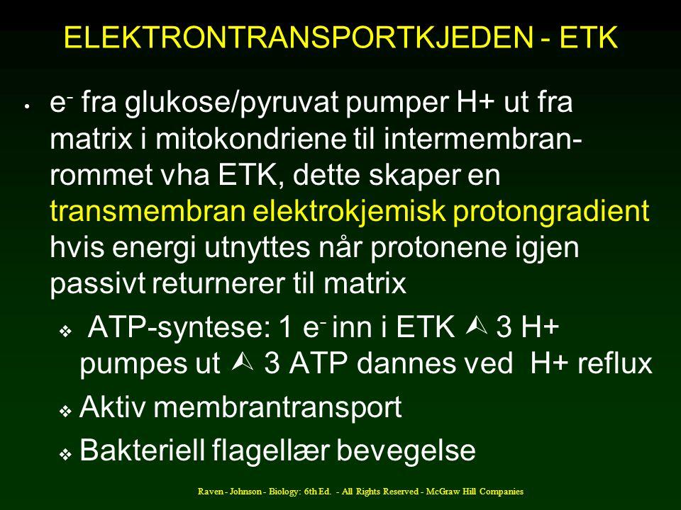ELEKTRONTRANSPORTKJEDEN - ETK
