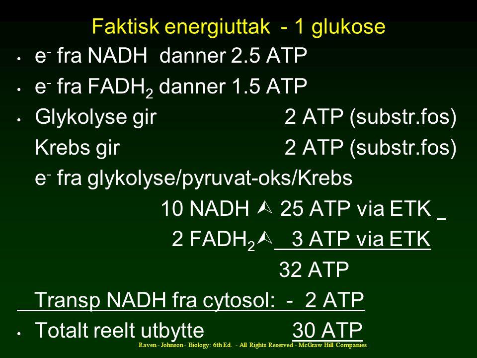 Faktisk energiuttak - 1 glukose