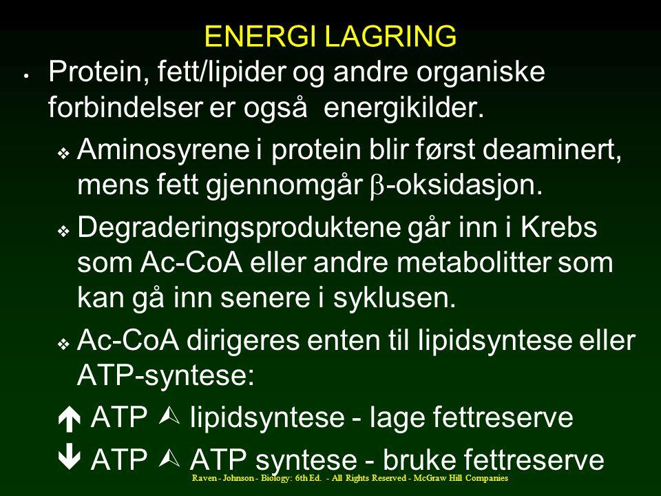 Ac-CoA dirigeres enten til lipidsyntese eller ATP-syntese:
