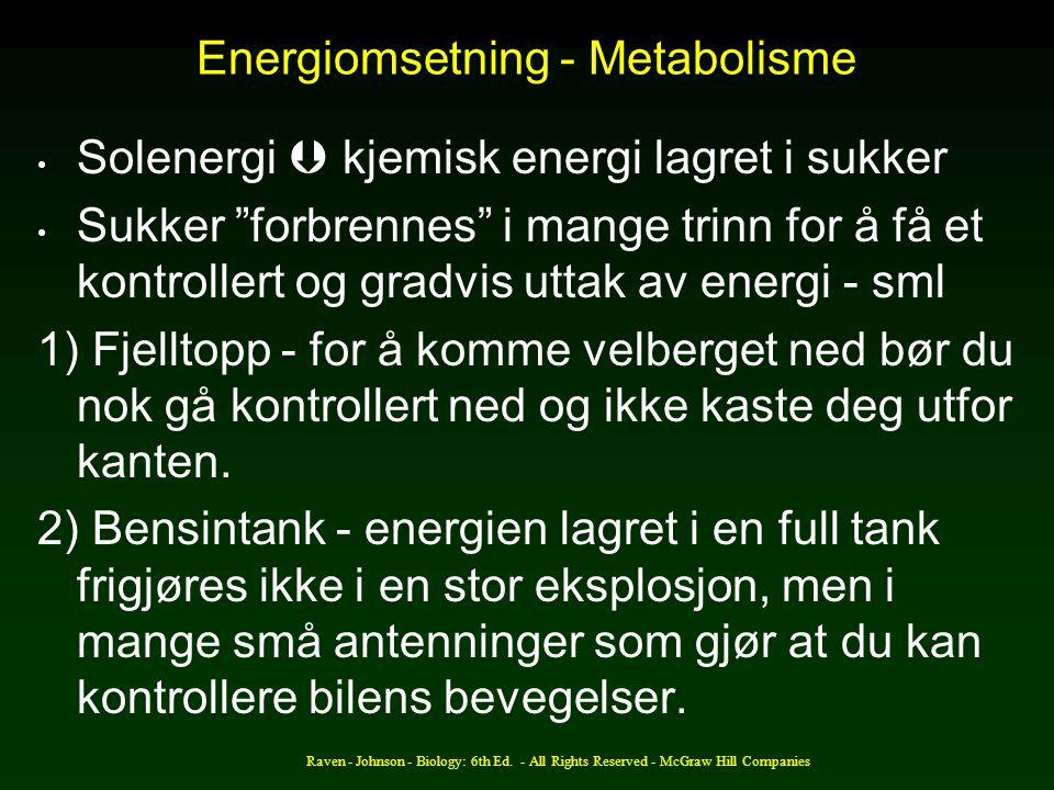 Energiomsetning - Metabolisme
