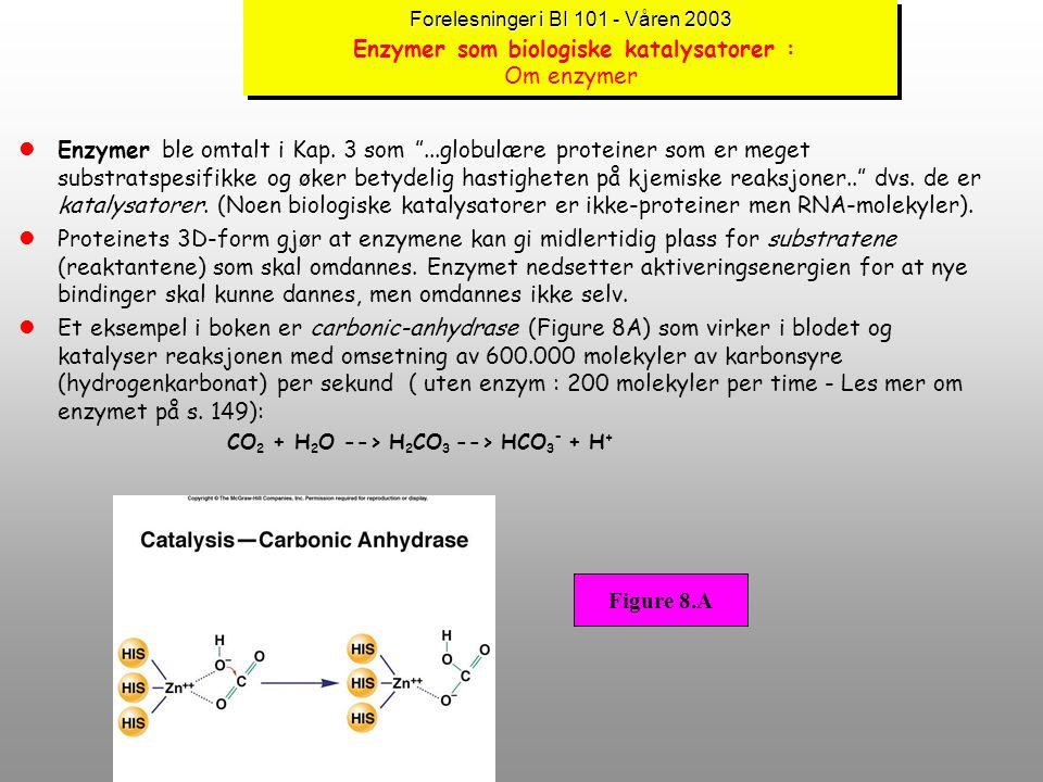 Forelesninger i BI 101 - Våren 2003 Enzymer som biologiske katalysatorer : Om enzymer
