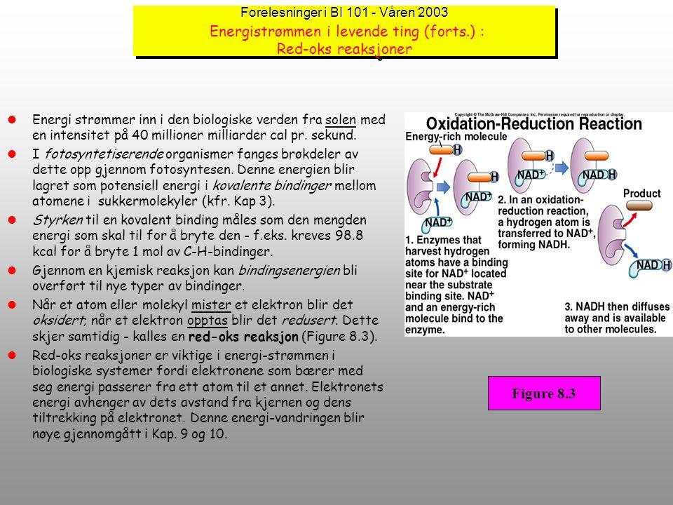 Forelesninger i BI 101 - Våren 2003 Energistrømmen i levende ting (forts.) : Red-oks reaksjoner