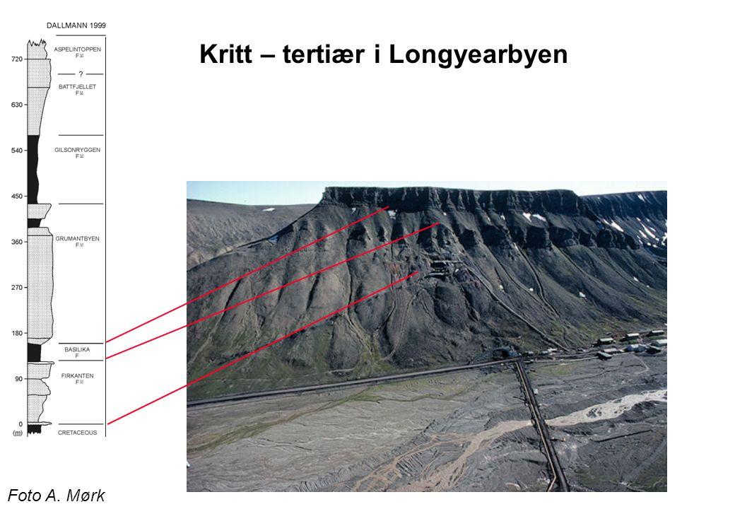 Kritt – tertiær i Longyearbyen