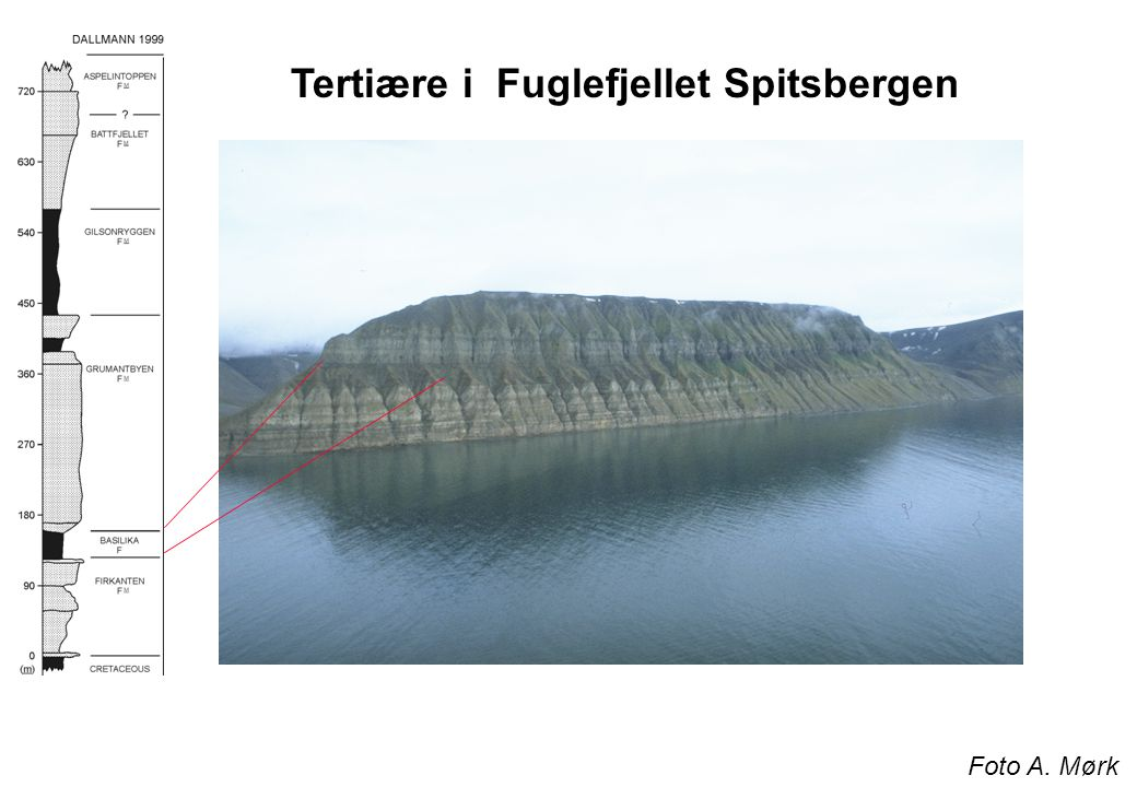 Tertiære i Fuglefjellet Spitsbergen