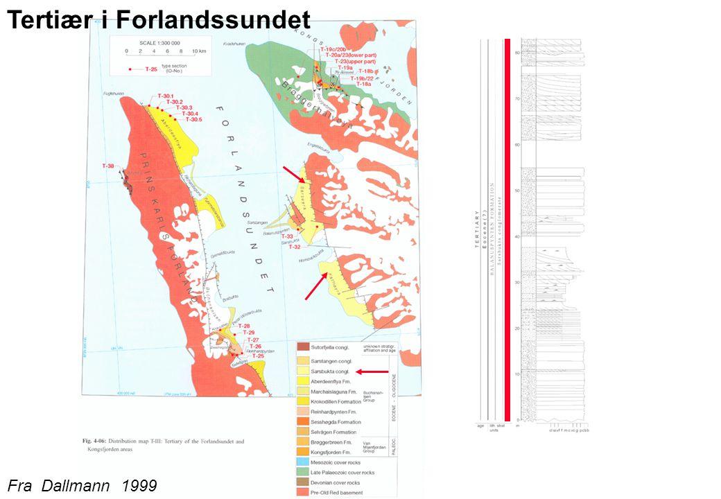 Tertiær i Forlandssundet