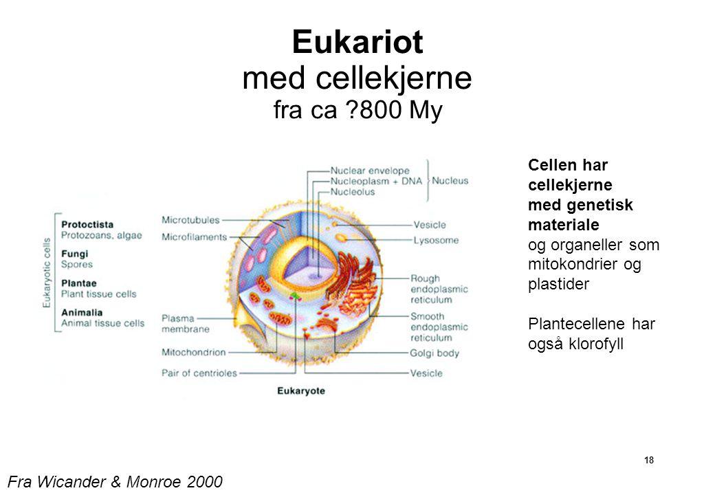 Eukariot med cellekjerne fra ca 800 My