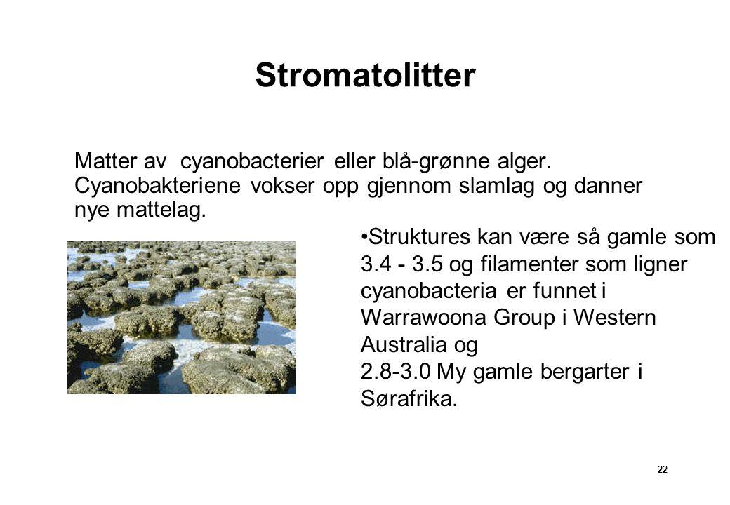 Stromatolitter Matter. Matter av cyanobacterier eller blå-grønne alger. Cyanobakteriene vokser opp gjennom slamlag og danner nye mattelag.