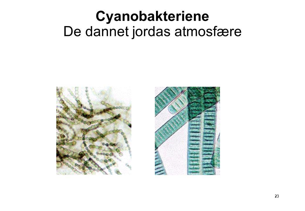 Cyanobakteriene De dannet jordas atmosfære