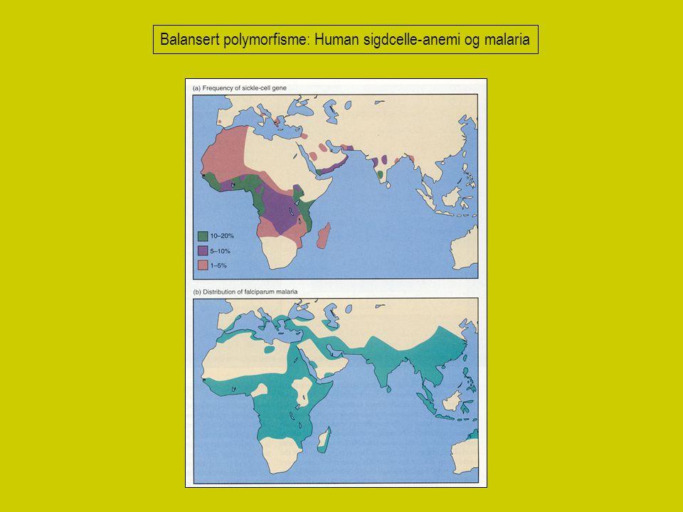 Balansert polymorfisme: Human sigdcelle-anemi og malaria