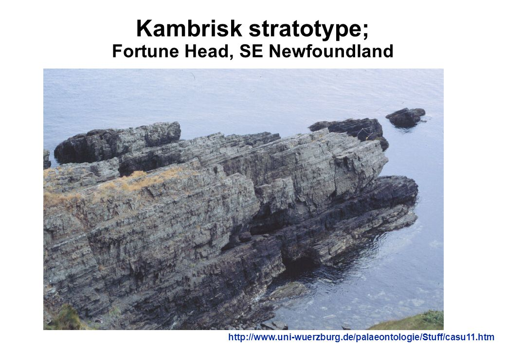 Kambrisk stratotype; Fortune Head, SE Newfoundland