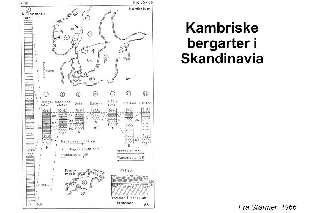 Kambriske bergarter i Skandinavia
