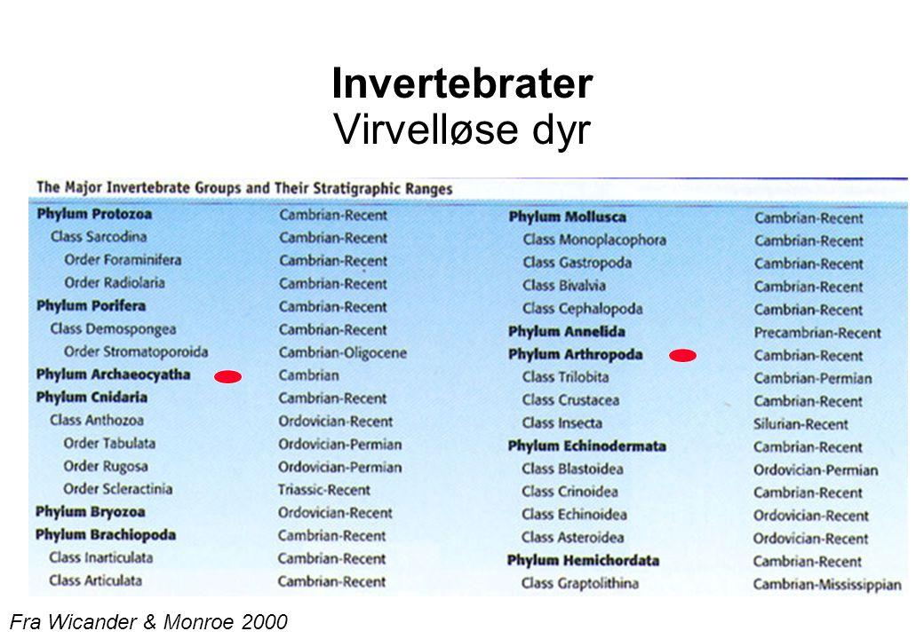 Invertebrater Virvelløse dyr