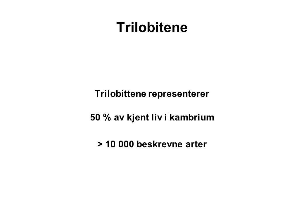 Trilobittene representerer 50 % av kjent liv i kambrium