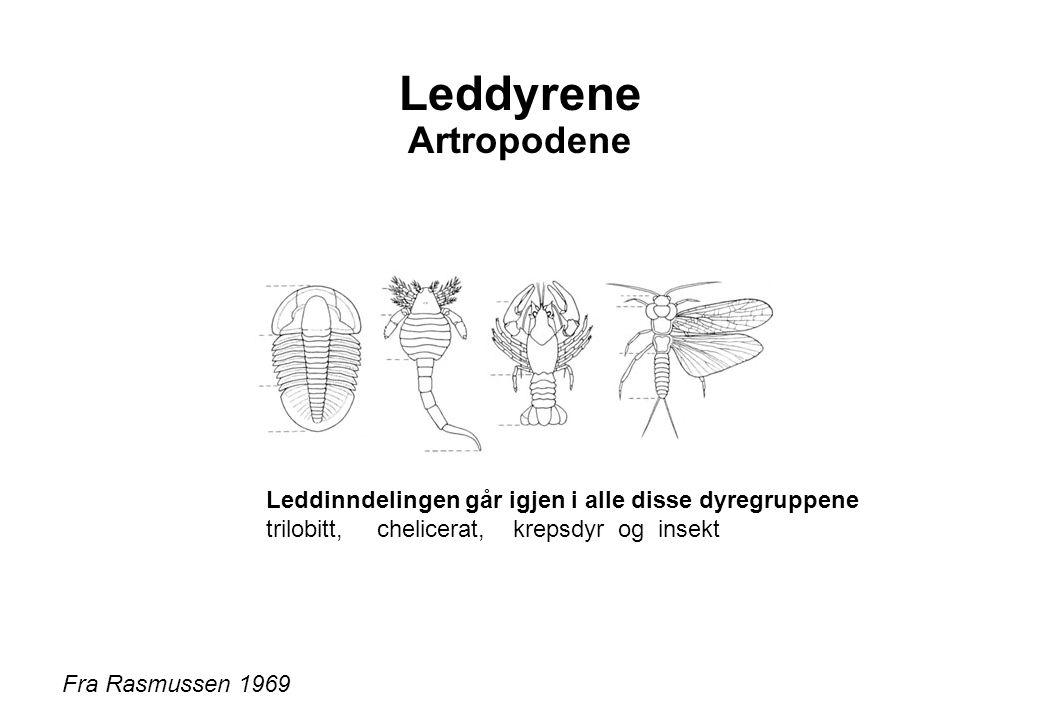 Leddyrene Artropodene