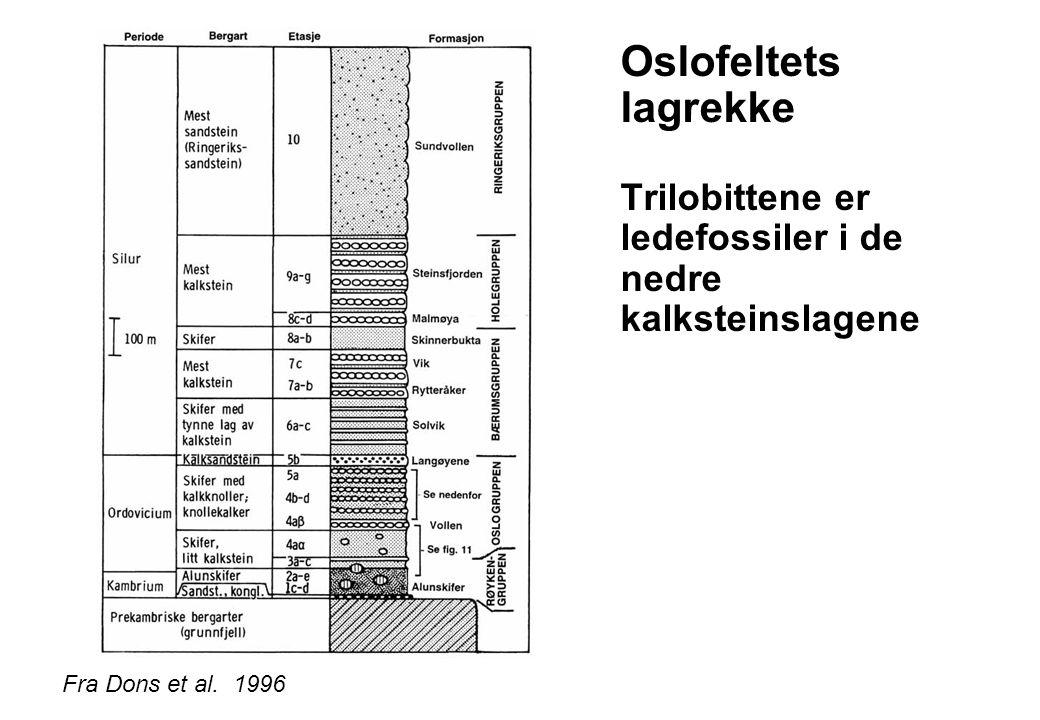 Oslofeltets lagrekke Trilobittene er ledefossiler i de nedre kalksteinslagene