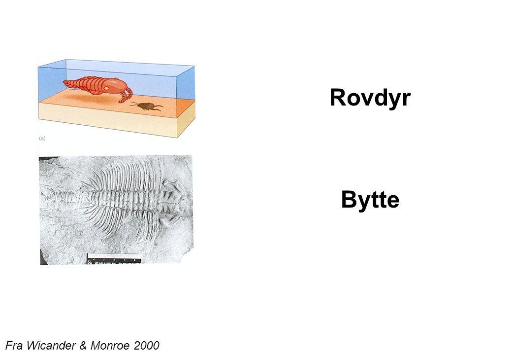 Rovdyr Bytte Fra Wicander & Monroe 2000