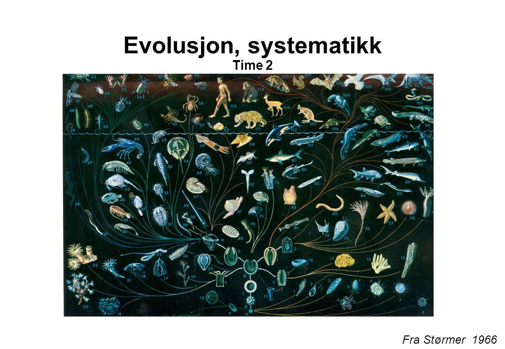 Evolusjon, systematikk Time 2