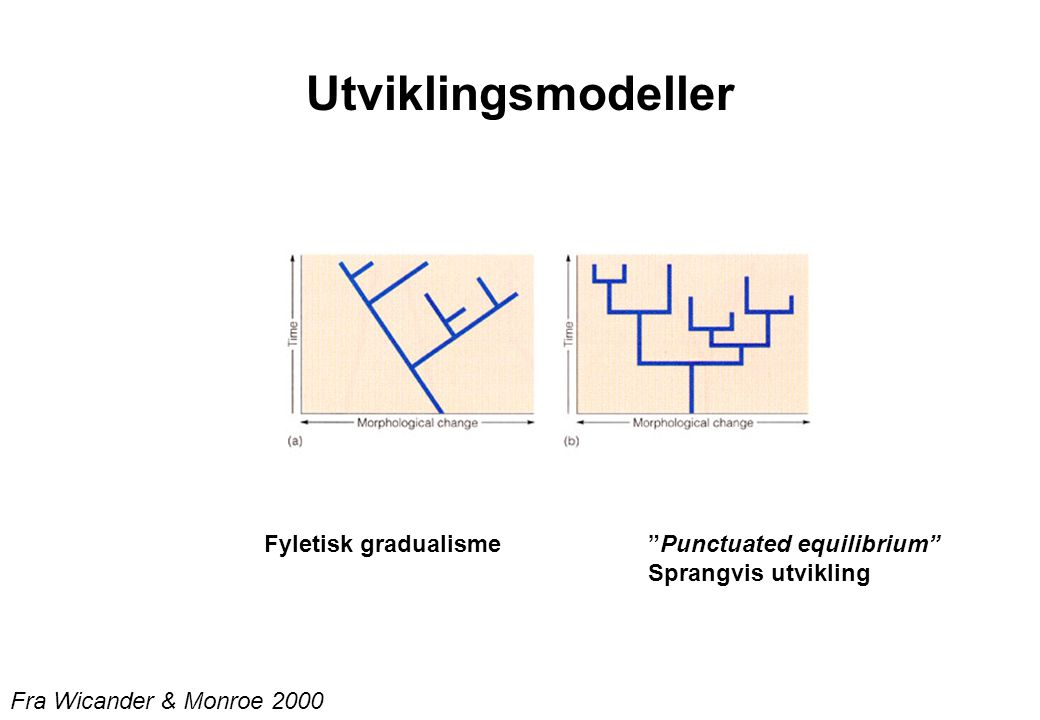 Utviklingsmodeller Fyletisk gradualisme Punctuated equilibrium