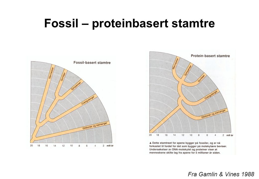 Fossil – proteinbasert stamtre