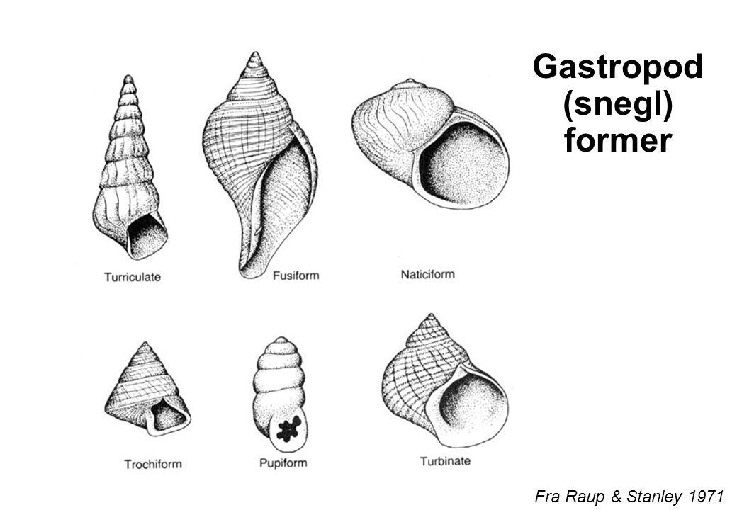 Gastropod (snegl) former
