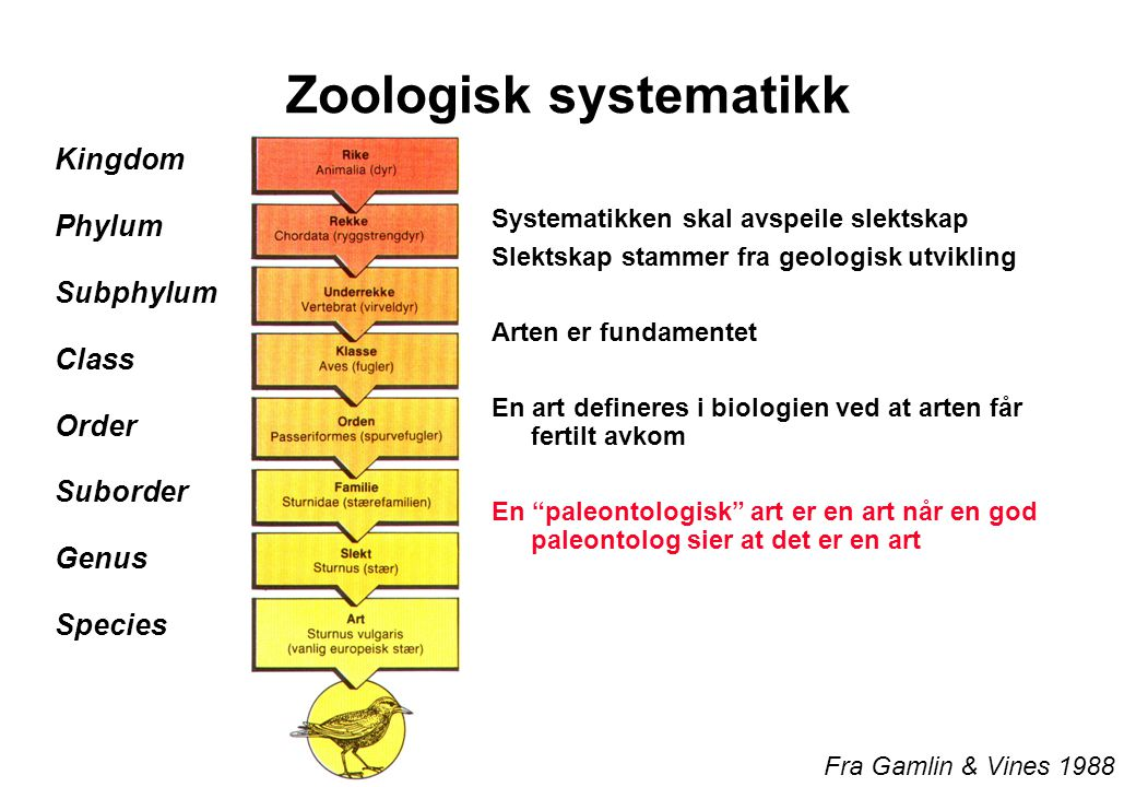 Zoologisk systematikk