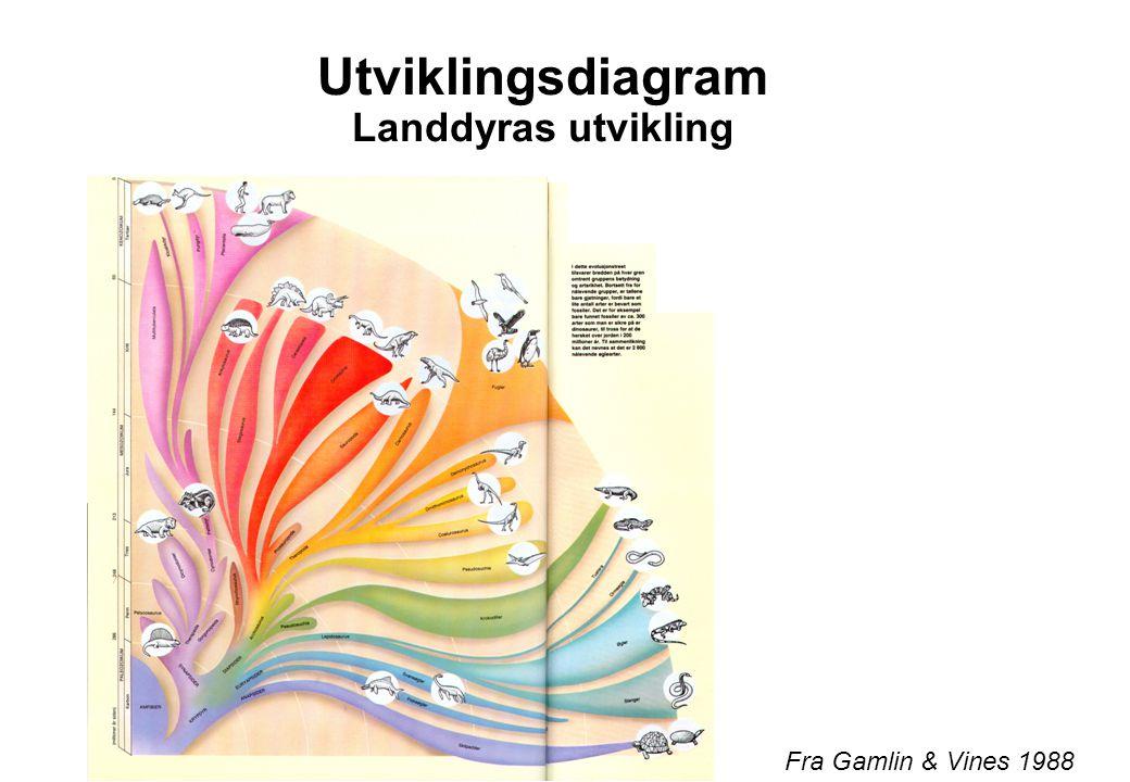 Utviklingsdiagram Landdyras utvikling