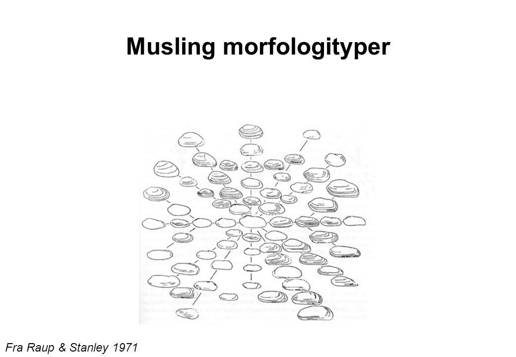 Musling morfologityper