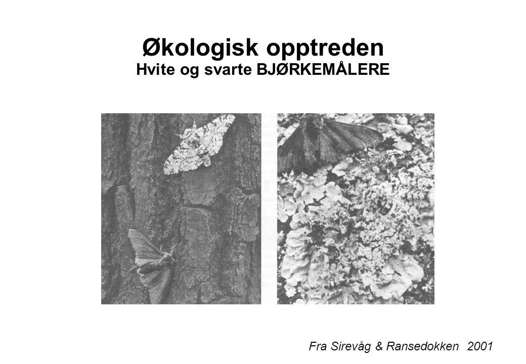 Økologisk opptreden Hvite og svarte BJØRKEMÅLERE