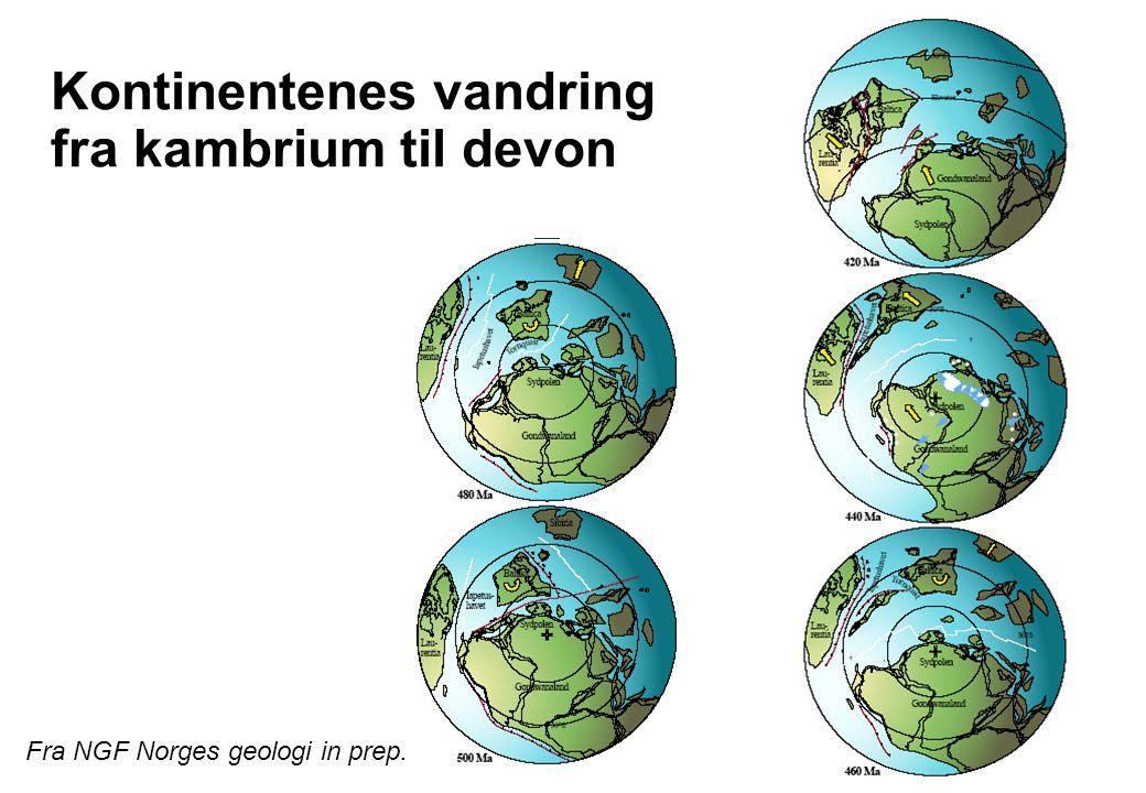 Kontinentenes vandring fra kambrium til devon