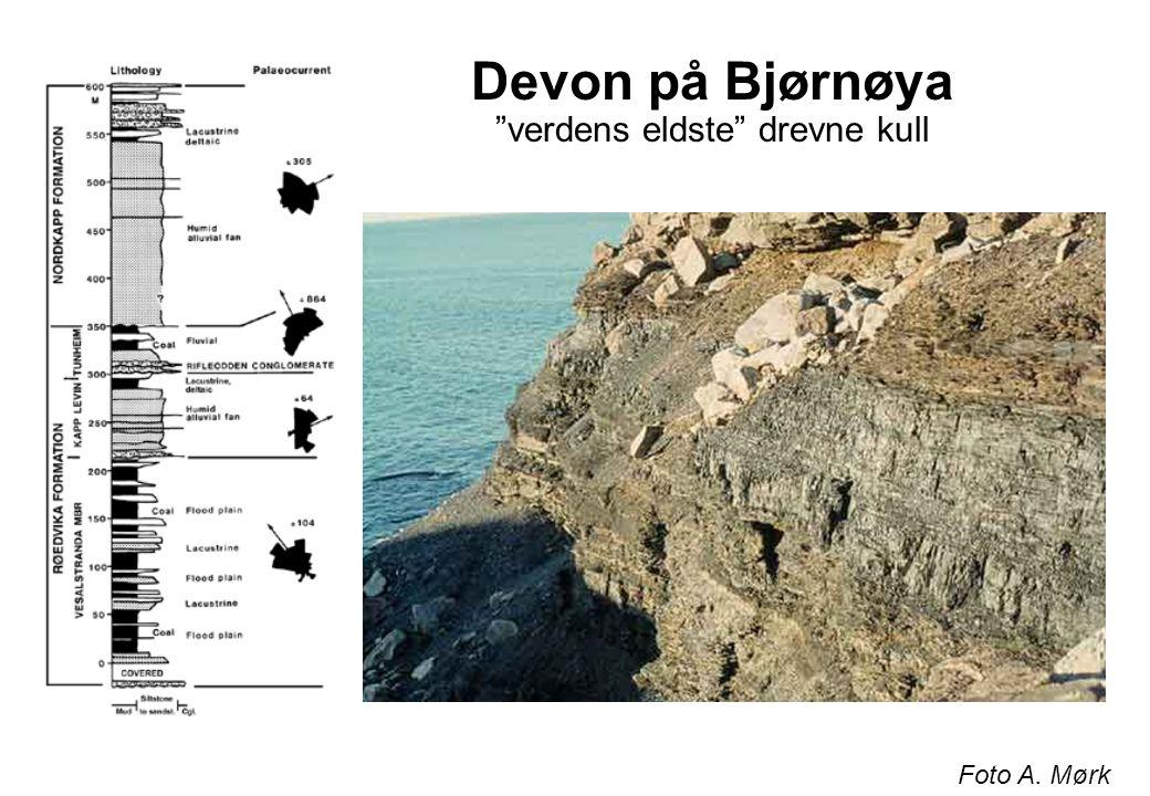 Devon på Bjørnøya verdens eldste drevne kull