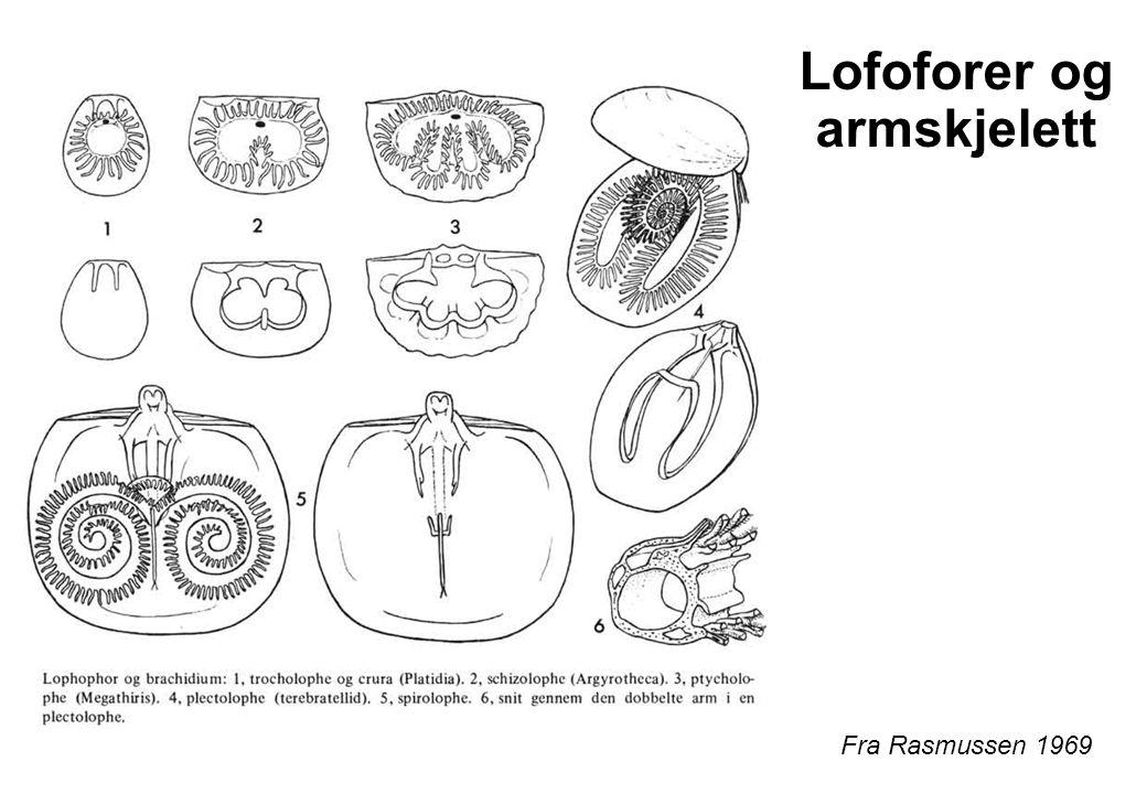 Lofoforer og armskjelett