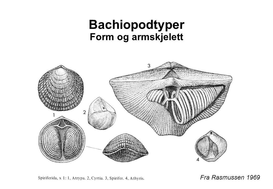 Bachiopodtyper Form og armskjelett