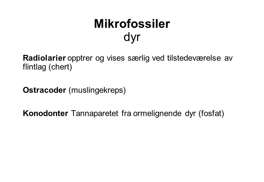 Mikrofossiler dyr Radiolarier opptrer og vises særlig ved tilstedeværelse av flintlag (chert) Ostracoder (muslingekreps)