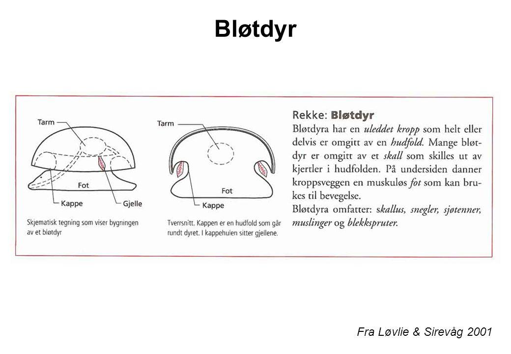 Bløtdyr Fra Løvlie & Sirevåg 2001