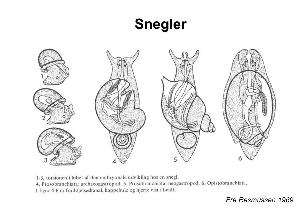 Snegler Fra Rasmussen 1969
