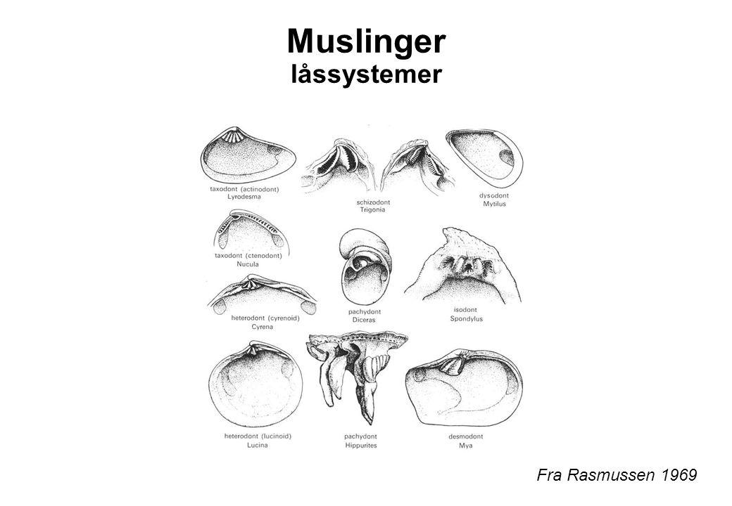 Muslinger låssystemer