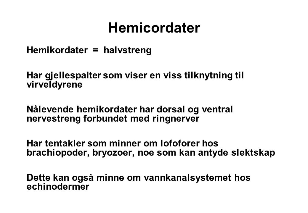 Hemicordater Hemikordater = halvstreng
