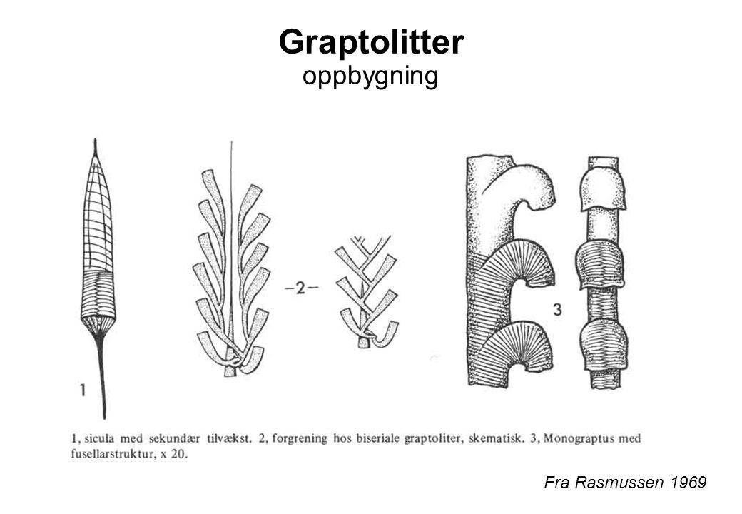Graptolitter oppbygning