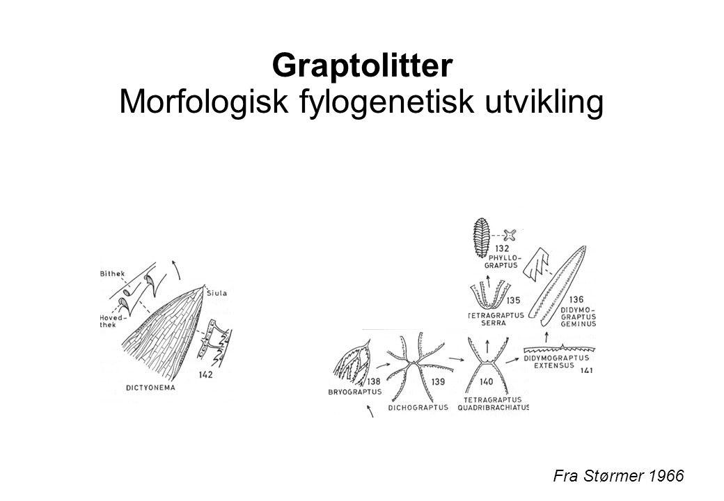 Graptolitter Morfologisk fylogenetisk utvikling