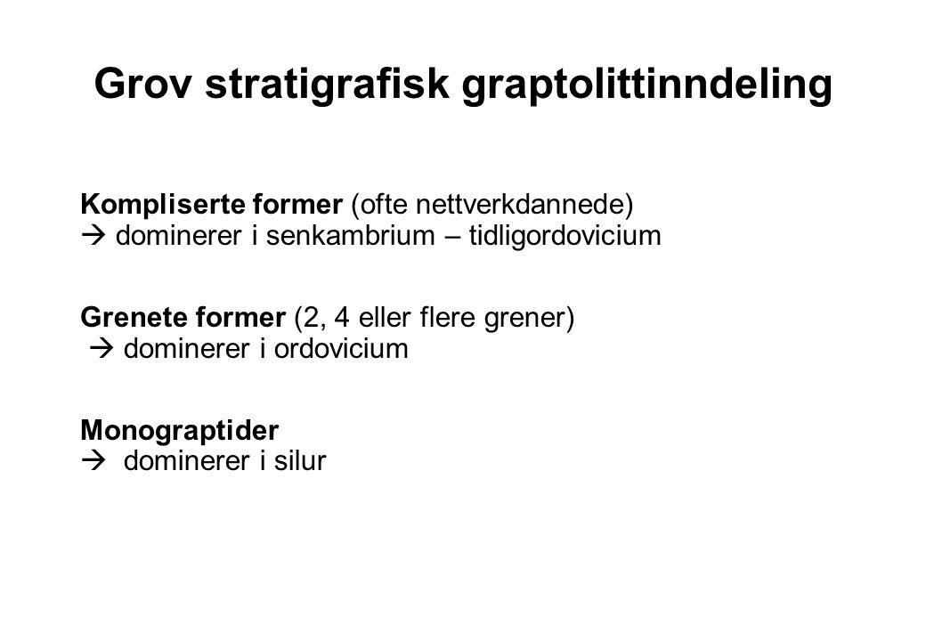 Grov stratigrafisk graptolittinndeling