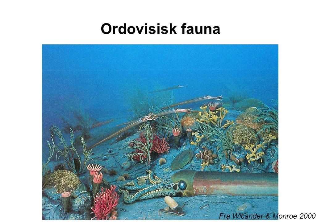 Ordovisisk fauna Fra Wicander & Monroe 2000