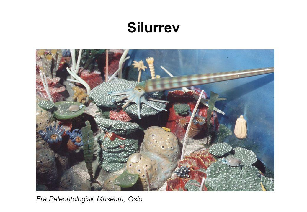 Silurrev Fra Paleontologisk Museum, Oslo
