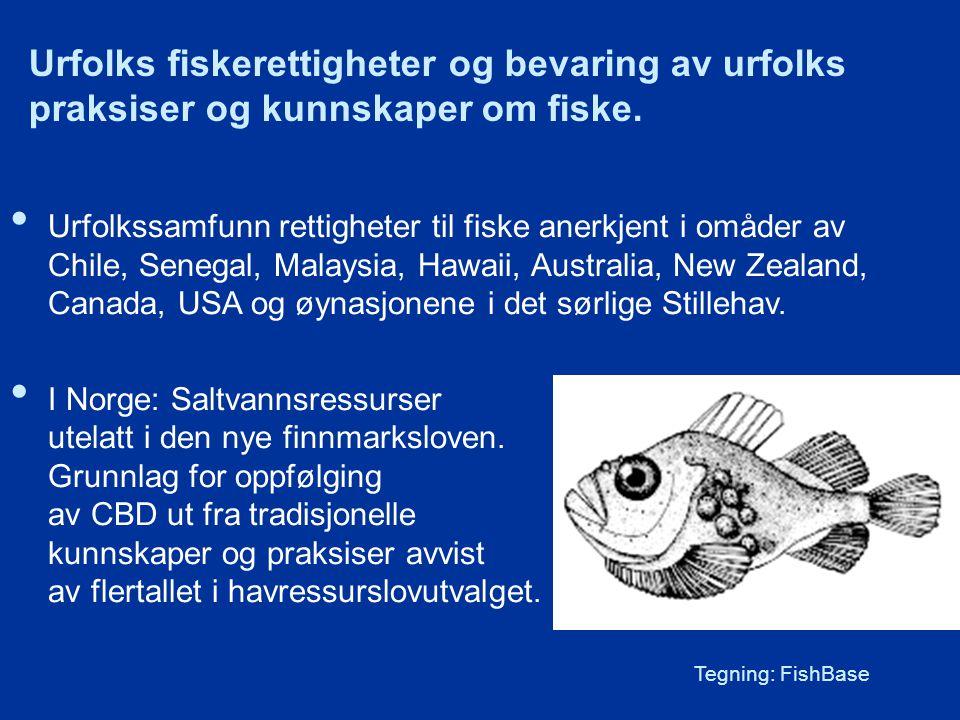 Urfolks fiskerettigheter og bevaring av urfolks praksiser og kunnskaper om fiske.