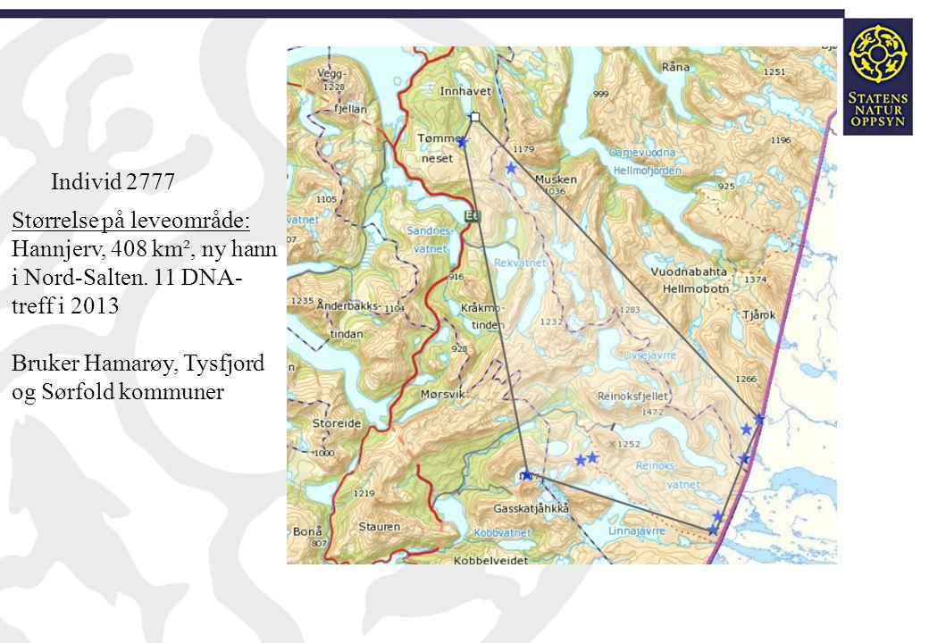 Individ 2777 Størrelse på leveområde: Hannjerv, 408 km², ny hann i Nord-Salten. 11 DNA-treff i 2013.