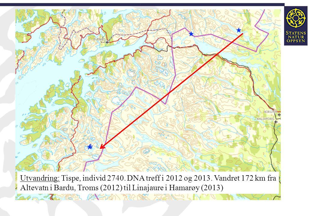 Utvandring: Tispe, individ 2740. DNA treff i 2012 og 2013