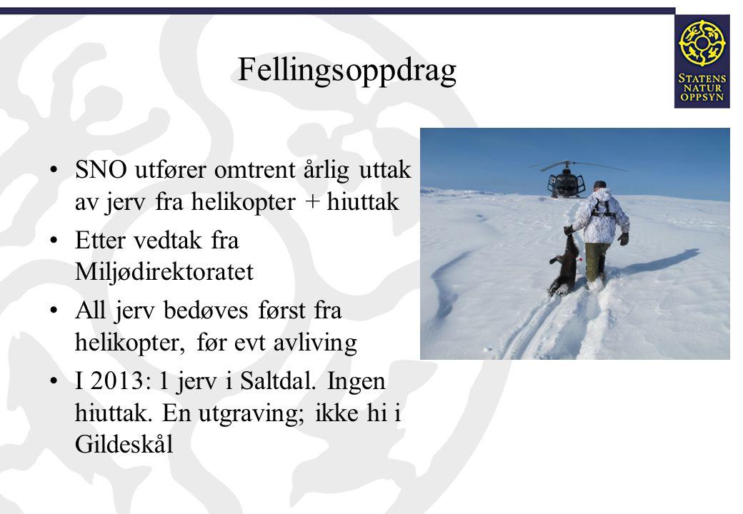 Fellingsoppdrag SNO utfører omtrent årlig uttak av jerv fra helikopter + hiuttak. Etter vedtak fra Miljødirektoratet.