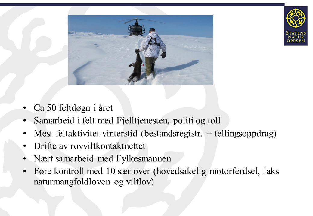 Ca 50 feltdøgn i året Samarbeid i felt med Fjelltjenesten, politi og toll. Mest feltaktivitet vinterstid (bestandsregistr. + fellingsoppdrag)