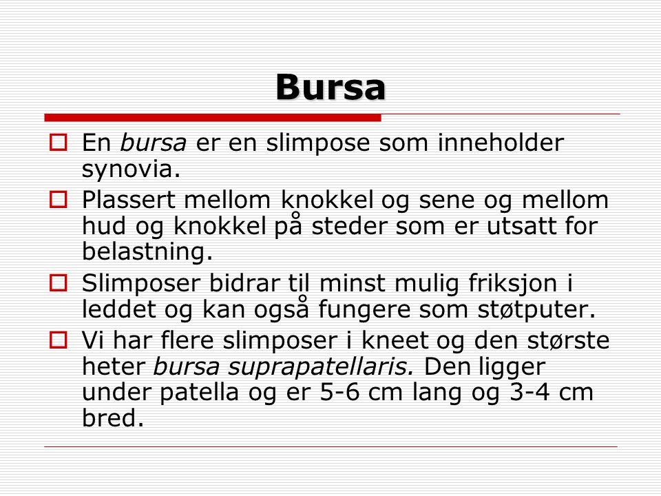 Bursa En bursa er en slimpose som inneholder synovia.